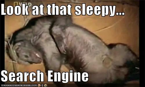 that sleepy ass honey badger