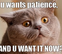 Fat cat with wide eyes wants patience NOW!