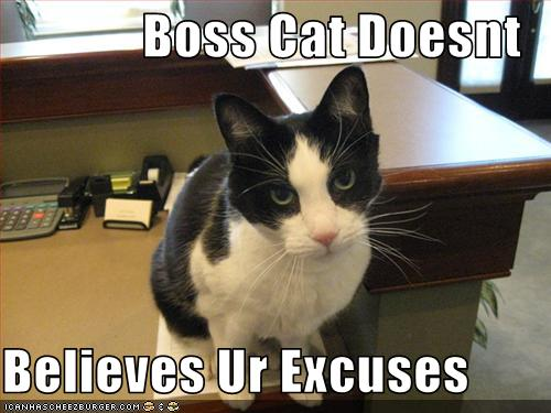 Boss Cat Doesnt Believes Ur Excuses